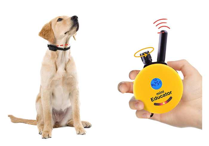 Yellow lab wearing the Educator Mini E-Collar